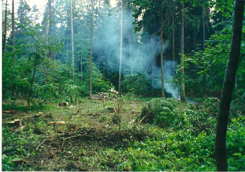 В 18-м квартале Баковского лесопарка (200 м от ул. Лермонтова) 8ca42a9cc451b